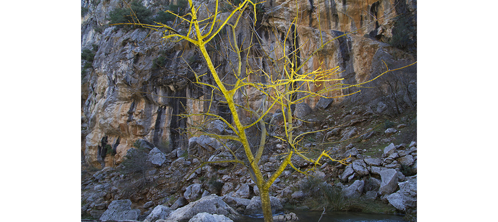 misc 15 Arbol amarillo cmyk color naturaleza jose camara
